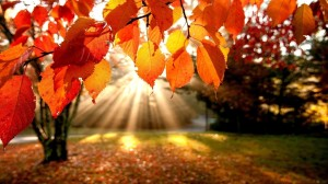 October sunlit-autumn-leaves-4187